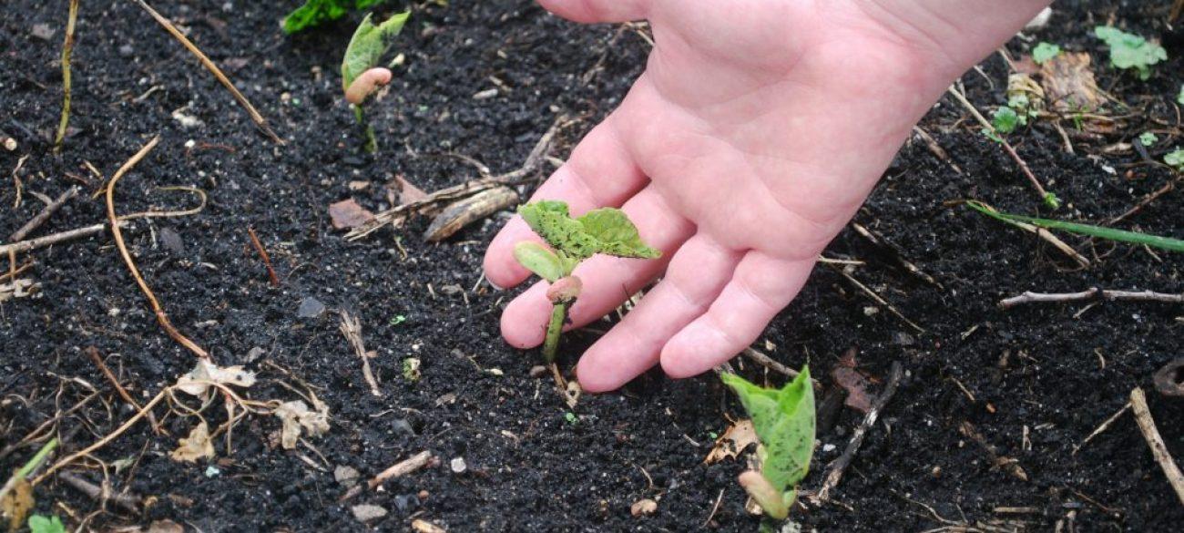 soil-1795902